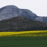 Landscape15